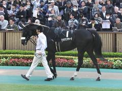 20131117 東京 ショウナンアチーヴ 02