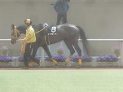 20110402(阪神競馬場)メジロマリアン 1