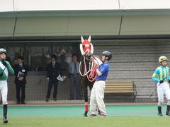 20140503 東京7R ショウナンアポロン 08