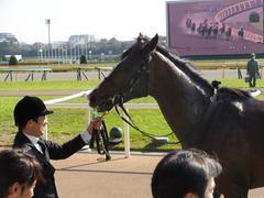 20131117 東京 ビップレボルシオン 24