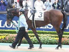 20141130 東京3R 2歳未勝利 トーセンカナロア 02