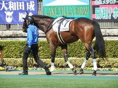 20180217 東京4R 4歳上障害未勝利 アークアーセナル 07