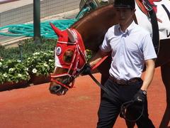 20160618 阪神8R 3歳上牝馬500万下 レーヌドブリエ 18