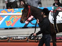 20170311 阪神3R 3歳メイクデビュー フェアチャイルド 16