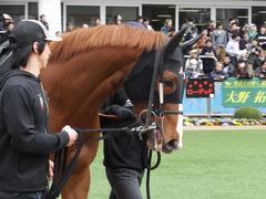 20150321 中山10R 韓国馬事会杯 ランドマーキュリー 04