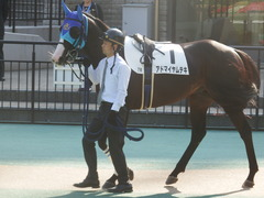 20181111 東京7R (500) アドマイヤムテキ 02