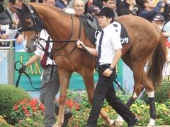 20180930 中山9R サフラン賞 2歳牝馬500万下 ポリアンサ 12