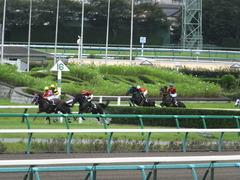 20150926 中山8R 清秋JS メジロサンノウ 11