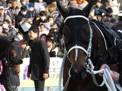 20160227 中山11R 総武S 4歳上OP ショウナンアポロン 14