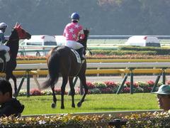 20131117 東京 ビップレボルシオン 16