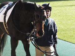 20151129 東京2R 2歳未勝利 ラルゴランド 08