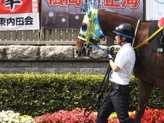 20150628 東京11R パラダイスS アルマディヴァン 04
