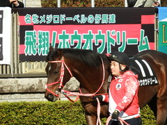 20180128 東京10R 早春S(1600) ホウオウドリーム 17