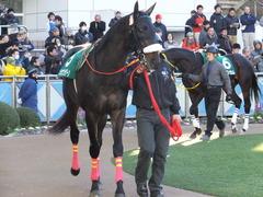 20140119 中山競馬場 ショウナンラグーン 05
