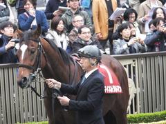 20141108 東京11R 京王杯2歳S マイネルグルマン 09