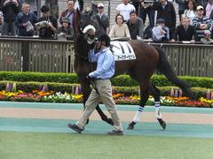 20160423 東京5R 3歳未勝利 アークアーセナル 03