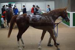 20191020 東京2R 2歳未勝利 プントファイヤー 22