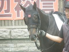 20190622 東京3R 3歳未勝利 ショウナンサジン 12