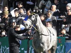 20141214 中山6R 2歳メイクデビュー  グローリアスレイ 12