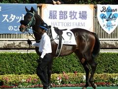 20171111 東京2R 2歳未勝利 ハッピーテーラー 08
