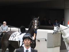 20160605 東京4R 3歳未勝利 ツボミ 15