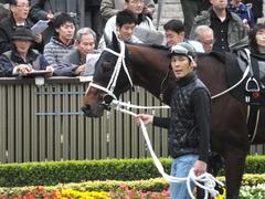20141108 東京9R ショウナンアポロン 06