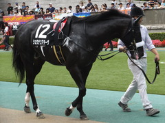 20150628 東京11R パラダイスS ショウナンアチーヴ 11