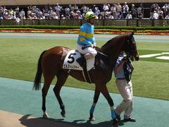 20170506 東京5R 3歳牝馬500万下 ビルズトレジャー 16