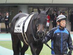 20151031 東京5R 2歳メイクデビュー ラルゴランド 01