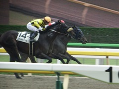 20180617 東京3R 3歳未勝利 ダノンシャレード 16