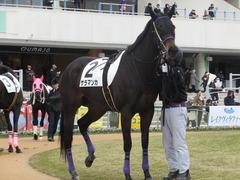 20170114 京都8R 4歳上牝馬500万下 サラマンカ 08