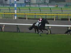 20141012 東京4R ウインメアリー 08