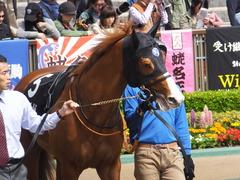20160424 東京9R 府中S (1600) アッシュゴールド 02