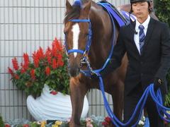 20151025 京都11R 菊花賞(G1) マッサビエル 09
