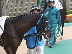 20141101 東京8R トレジャーマップ 06