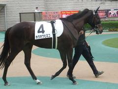 20190608 東京6R 3歳牝馬未勝利 ホウオウヒミコ 02