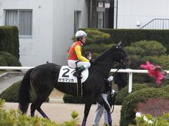 20170114 京都8R 4歳上牝馬500万下 サラマンカ 14
