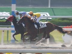 20151024 京都1R 2歳未勝利 サクレメジャー 13