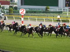 20140503 東京11R 青葉賞 ショウナンラグーン 15