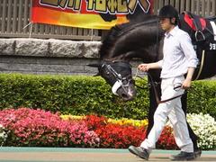 20150628 東京11R パラダイスS ショウナンアチーヴ 08