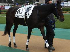 20141012 東京4R ウインメアリー 04