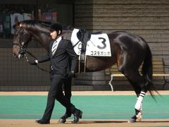 20150221 東京2R 3歳未勝利 コスモポッポ 02