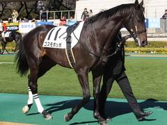 20150131 東京2R 3歳未勝利 コスモポッポ 08
