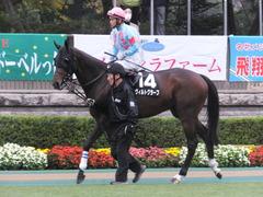 20151123 東京9R 伊勢佐木特別 ヴィルトグラーフ 10