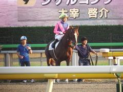 20181111 東京11R (1000) メイショウノボサン 13