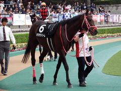 20171104 東京9R 南武特別(1000) ホウオウドリーム 11
