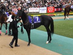 20141102 東京11R 天皇賞(秋) サトノノブレス 05