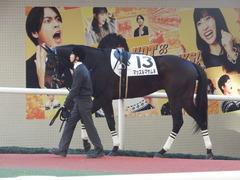 20181208 阪神12R (500) マッスルマサムネ 02
