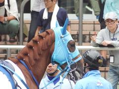 20180922 中山2R 2歳牝馬未勝利 ヴァルドワーズ 10