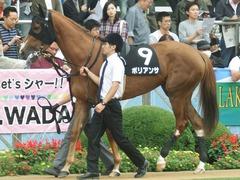 20180930 中山9R サフラン賞 2歳牝馬500万下 ポリアンサ 04